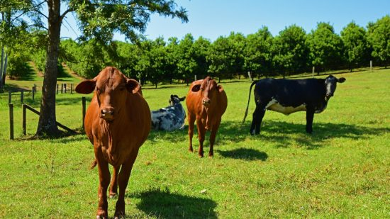 Wild Duck Farm – Sunshine Coast Hinterland Farm Stays